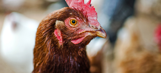 Sodexo: First Company in its Sector to Make Worldwide Commitment to Cage Free Eggs
